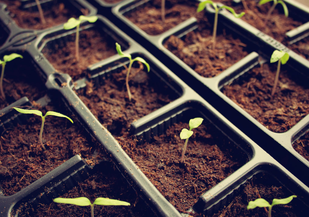 seedlings growing as a metaphor for living on a budget wisely