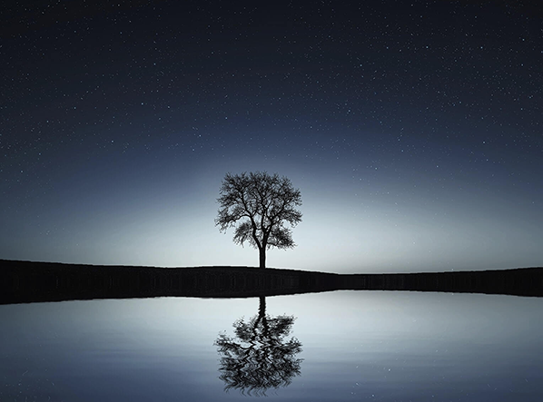 Tree beside lake with it's reflection